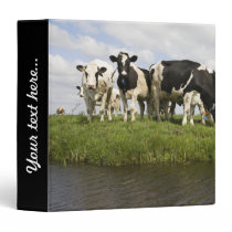 Group of Friesian cows Binder