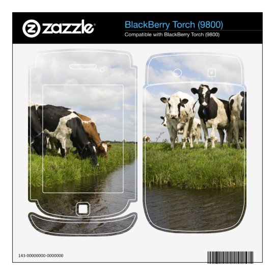 Group of Friesian cows BlackBerry Torch Decal
