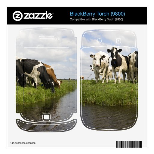 Group of Friesian cows BlackBerry Torch Decals
