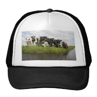 Group of Friesian cows Trucker Hat