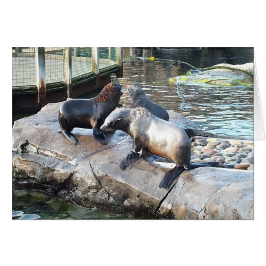 Group of fur seals card