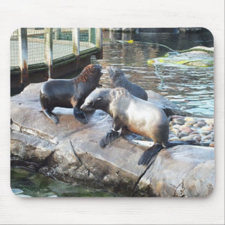Group of fur seals mouse pad