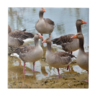 Group of greylag geese tile