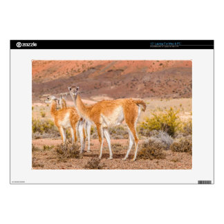 """Group of Guanacos at Patagonia Argentina Skins For 15"""" Laptops"""