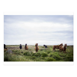 Group of Horses in Field Postcard