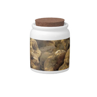 Group of italian expensive white truffles candy dish