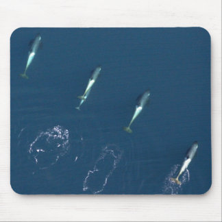 Group of Killer Whales Swimming Mouse Pad