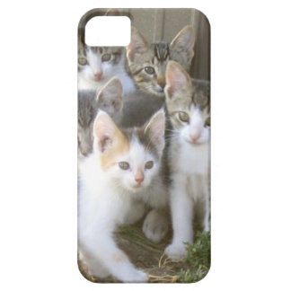 Group of Kittens iPhone Case