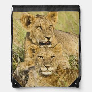 Group of lion cubs, Panthera leo, Masai Mara, Drawstring Backpack