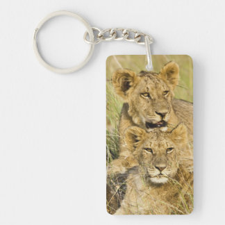 Group of lion cubs, Panthera leo, Masai Mara, Keychain