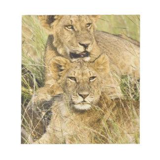 Group of lion cubs, Panthera leo, Masai Mara, Notepad