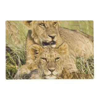 Group of lion cubs, Panthera leo, Masai Mara, Placemat