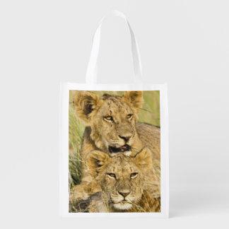 Group of lion cubs, Panthera leo, Masai Mara, Reusable Grocery Bags