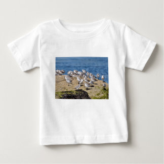 Group of Little stints at Quiberon in France Baby T-Shirt