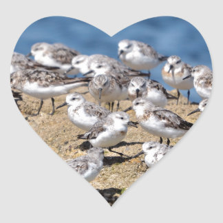 Group of Little stints at Quiberon in France Heart Sticker