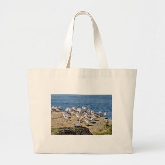 Group of Little stints at Quiberon in France Large Tote Bag