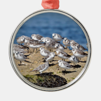 Group of Little stints at Quiberon in France Metal Ornament