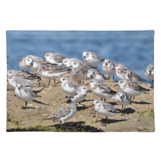 Group of Little stints at Quiberon in France Placemat