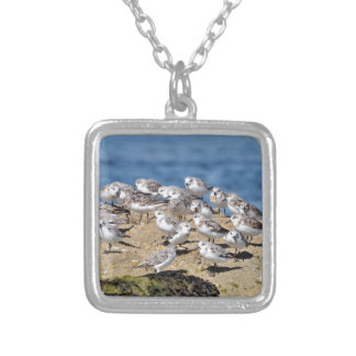 Group of Little stints at Quiberon in France Silver Plated Necklace