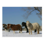 Group of Miniature Horses in the Snow Postcard