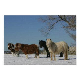 Group of Miniature Horses in the Snow Poster