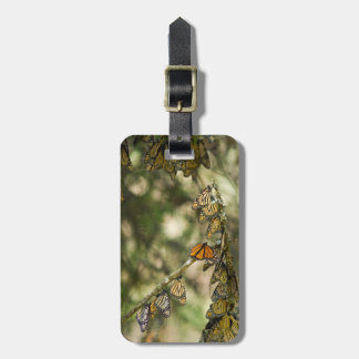 Group of Monarch Butterfies, Mexico Luggage Tag