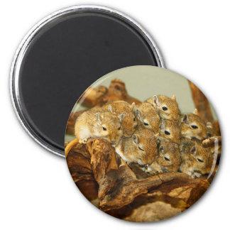 Group of Mongolian Gerbils Meriones Unguiculatus 2 Inch Round Magnet