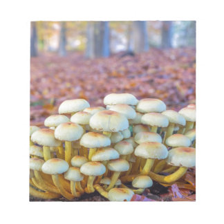 Group of mushrooms in fall beech forest notepad