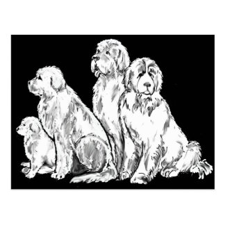 Group of Newfoundland dogs Postcard