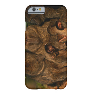 Group of olive baboons (Papio anubis) watching, Barely There iPhone 6 Case