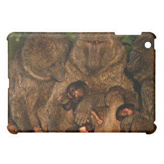 Group of olive baboons (Papio anubis) watching, iPad Mini Case