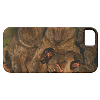 Group of olive baboons (Papio anubis) watching, iPhone SE/5/5s Case