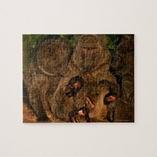 Group of olive baboons (Papio anubis) watching, Puzzle