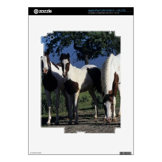 Group of Paint Horses iPad 3 Decal