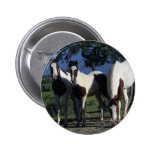 Group of Paint Horses Pin