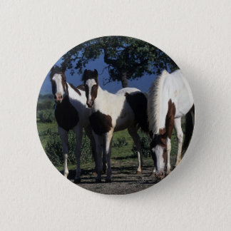 Group of Paint Horses Pinback Button