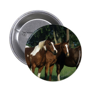 Group of Paint Horses Standing Pinback Button