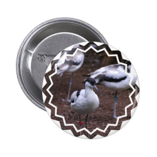 Group of Pied Avocets Pinback Buttons