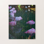 Group of Pink Flamingoes Jigsaw Puzzles