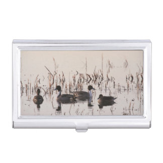 Group of Pintail Ducks Gather and Swims in a lake Business Card Holder
