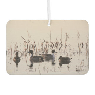 Group of Pintail Ducks Gather and Swims in a lake Car Air Freshener
