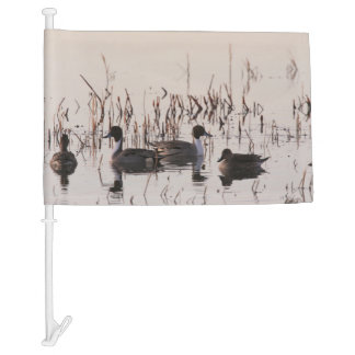 Group of Pintail Ducks Gather and Swims in a lake Car Flag