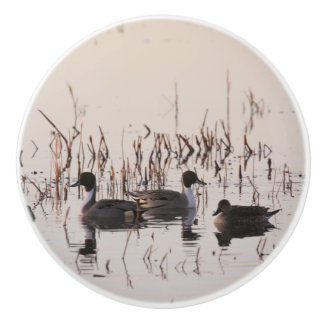 Group of Pintail Ducks Gather and Swims in a lake Ceramic Knob
