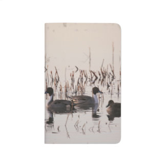 Group of Pintail Ducks Gather and Swims in a lake Journal