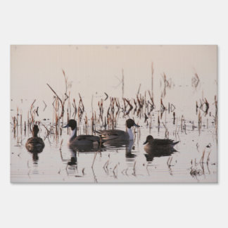 Group of Pintail Ducks Gather and Swims in a lake Yard Sign