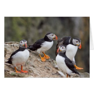 Group of Puffins Cards