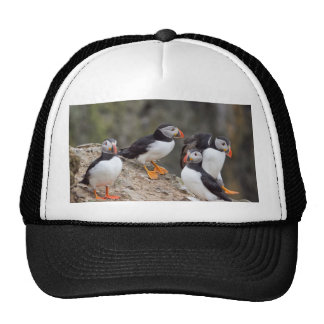 Group of Puffins Hats