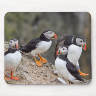 Group of Puffins Mouse Pads