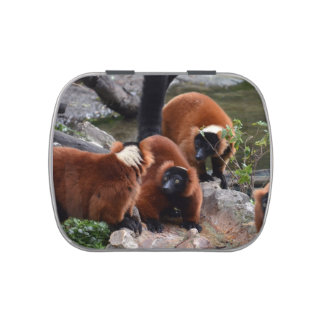 group of red ruffed lemur looking center candy tins