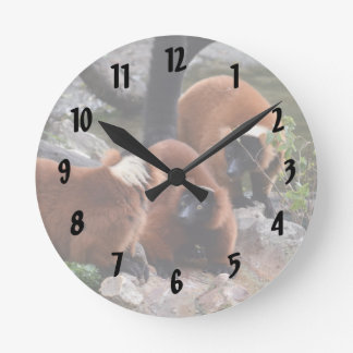 group of red ruffed lemur looking center round clock